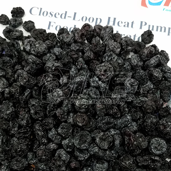 Blueberry Dehydrator