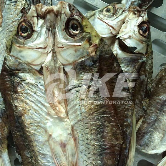 Fish Dehydrator