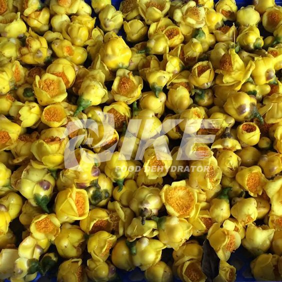 Golden Camellia Drying Machine
