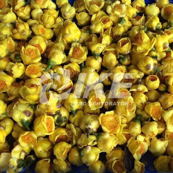 Golden Camellia Drying Machine