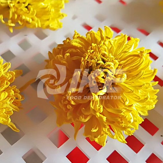 Yellow Chrysanthemum Drying Machine