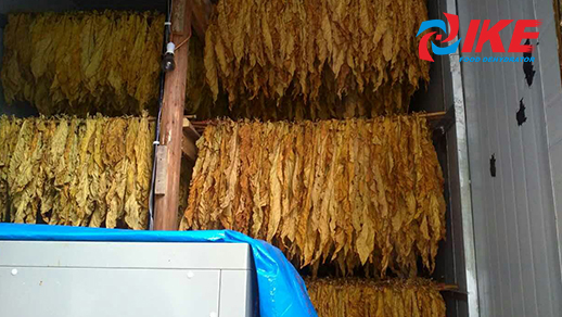 how to dry tobacco by IKE drying room