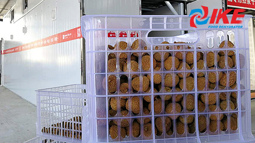 Dried Lychee Dry By Vegetable Air Dryer
