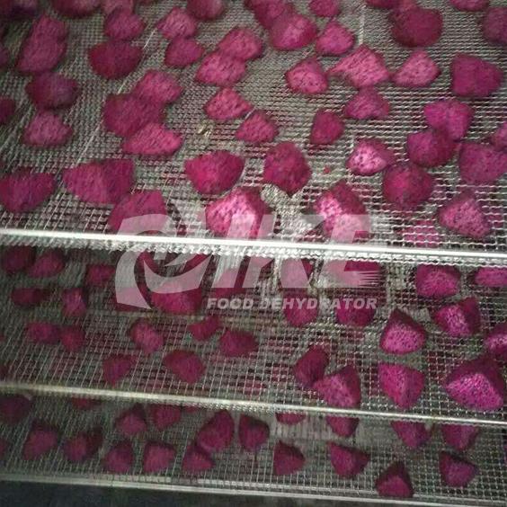 IKE-Pitaya Drying Machine Hot Mango Drying Machine From IKE-2
